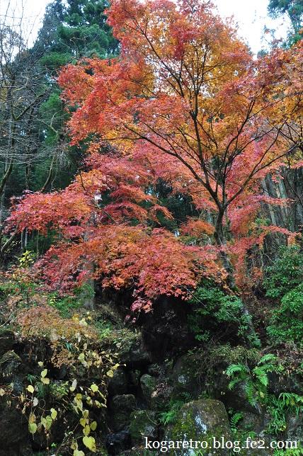 出流ふれあいの森の紅葉2