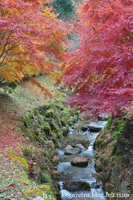 出流ふれあいの森の紅葉3