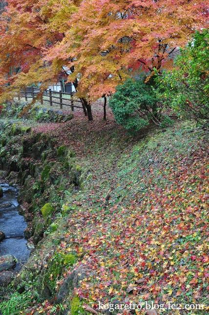 出流ふれあいの森の紅葉4