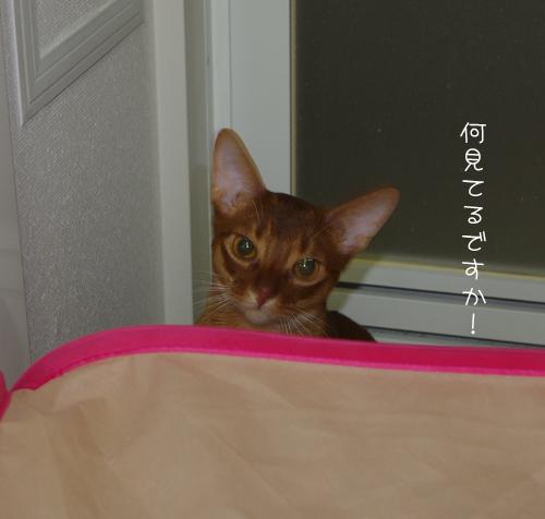 何見てるですか!