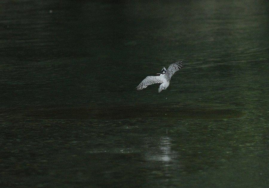 20130703-fish-001.jpg