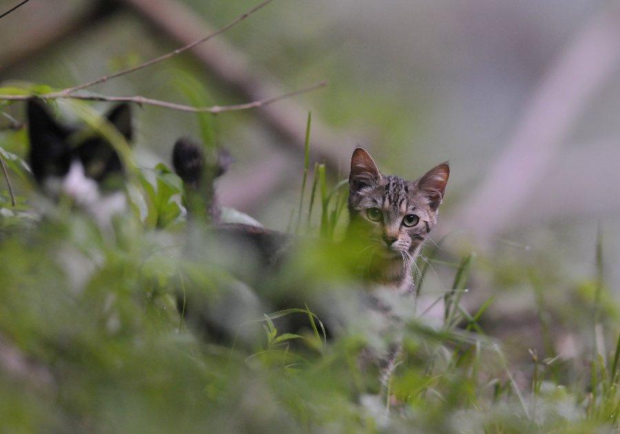 20130718-cats-002.jpg