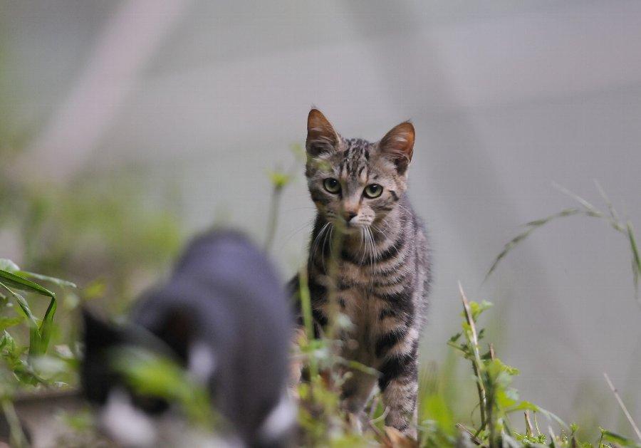 20130718-cats-003.jpg
