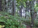 急坂 美しいブナ林マイナスイオン 元気をもらって登る。