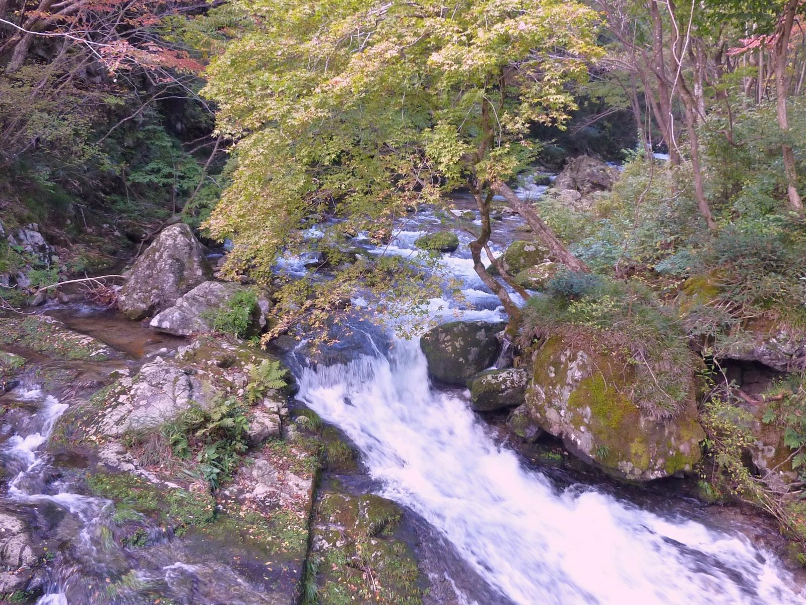 『白賀川』白賀渓谷の秋 紅葉がもう直ぐ下りて来る、