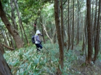 杉の植林地帯へ分け入り歩く・・・下山時の為 テープ付けする。