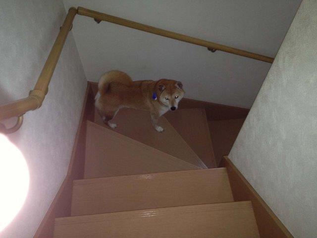階段にて012