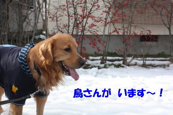 bu-102780001.jpg