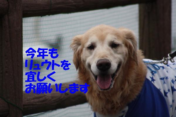 bu-102840001.jpg