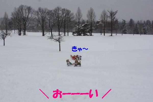 bu-102940001.jpg
