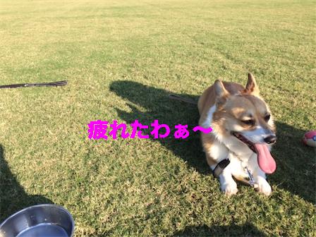 10_201410171316526ee.jpg