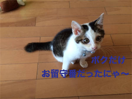 11_201410171325348fa.jpg