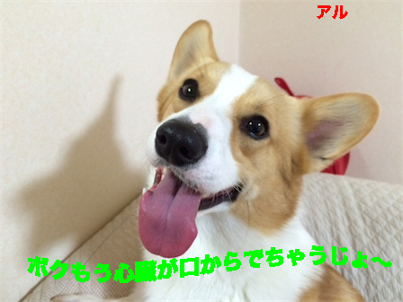 12_20141213114610fc2.jpg