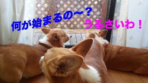 1_201311301443099d3.jpg