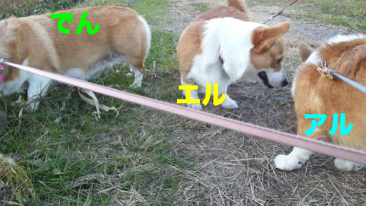 1_20131202114602a23.jpg