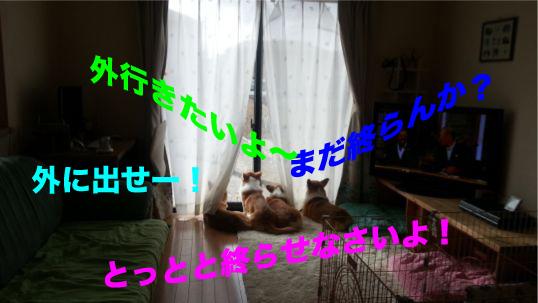 1_20131209170953192.jpg