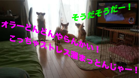 1_20131212104134cab.jpg