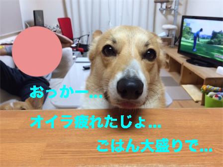 1_20141108201600fd5.jpg