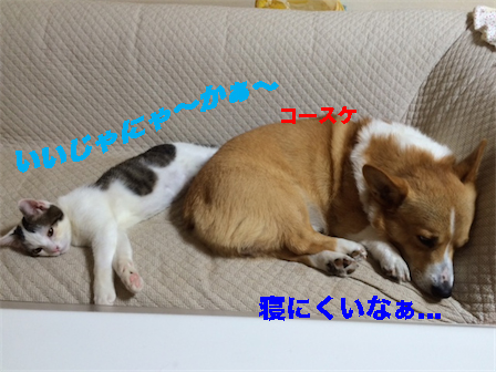 1_201411231404076be.jpg