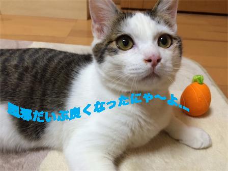 1_2014121311212544a.jpg