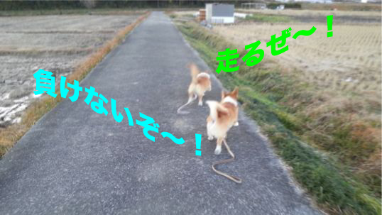 2_2013121019093468b.jpg