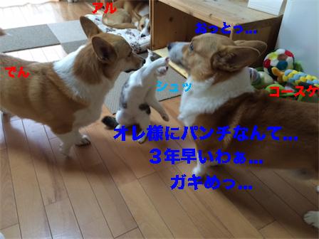 2_20141113113337bc8.jpg