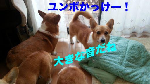 3_20131130144310ba6.jpg
