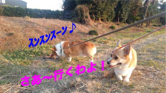 3_20131205130109ff7.jpg