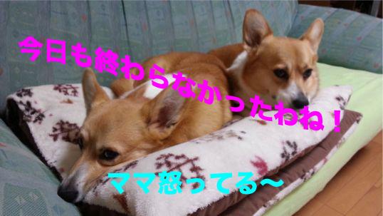3_20131212104136a3f.jpg
