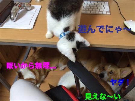 3_201410160939455ef.jpg