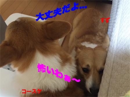 3_20141102113454825.jpg