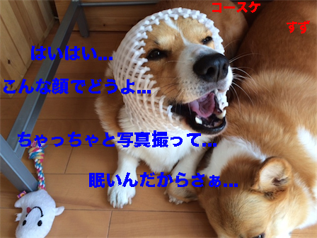 3_20141108110658b6b.jpg