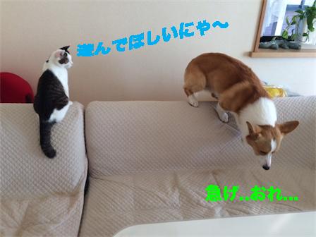 3_20141122112121e1b.jpg