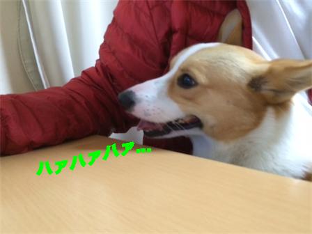 3_201411271045380d5.jpg