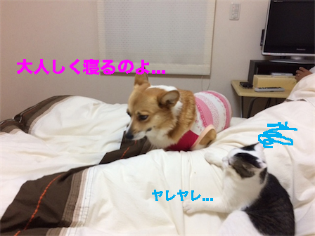 3_20141206094609df8.jpg