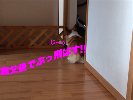 4_20141011103148652.jpg