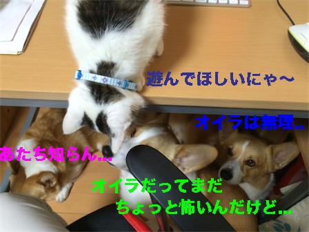 4_20141016093946452.jpg