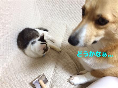 4_20141020222007e93.jpg