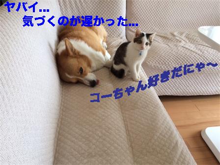 4_20141024083319b15.jpg