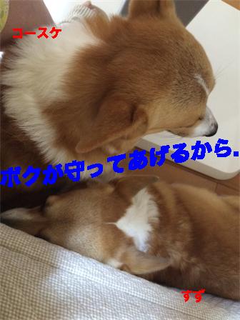4_2014110211345626f.jpg