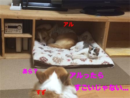 4_201411131913585c0.jpg