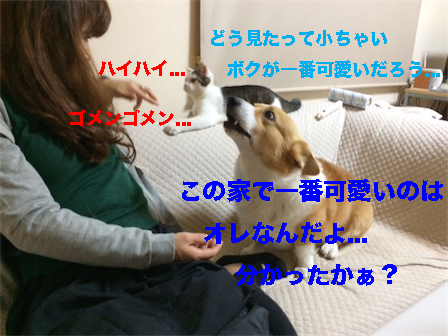 4_20141202083828091.jpg