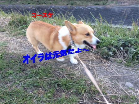 4_20141211081548ce3.jpg