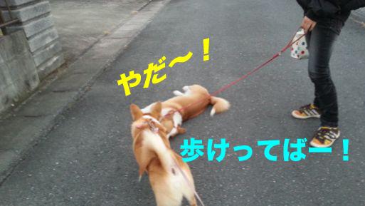 5_20131202114610e3d.jpg