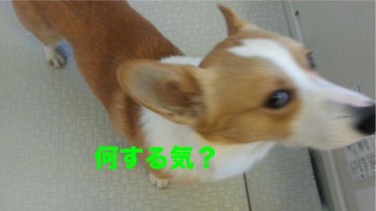 5_20131210190937532.jpg