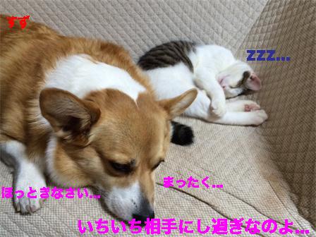 5_20141113113341bc4.jpg