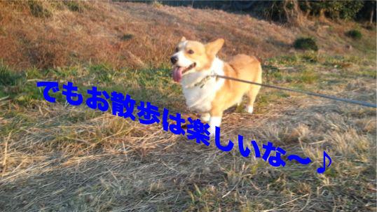6_201312051304227f8.jpg
