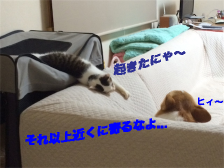 9_20141019114245ca9.jpg