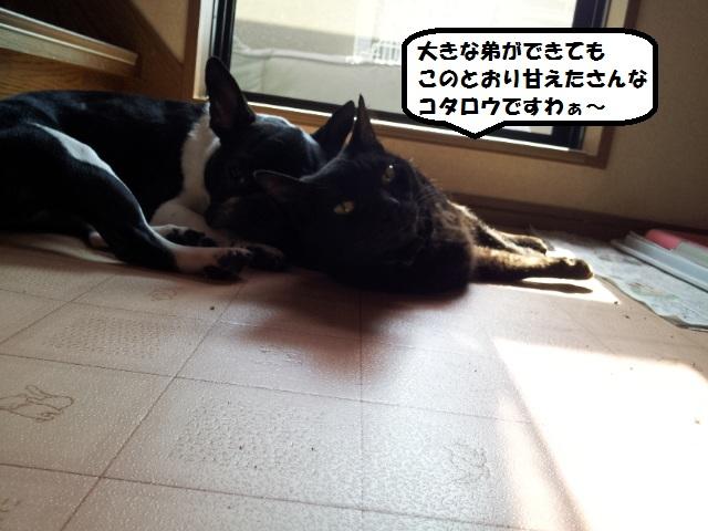 20130607_082613.jpg