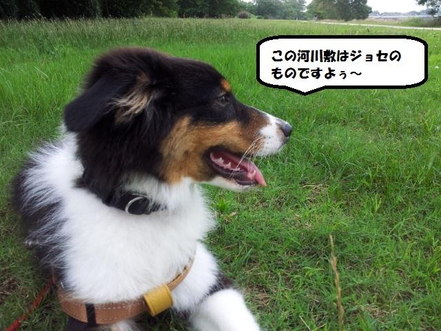 20130706_081046.jpg